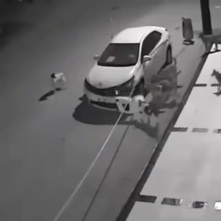 Man attacks dog so he could park – then the animal gets revenge with the help of his friends