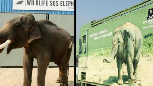 Elephant enjoys first year of freedom after 50 years as tourist slave