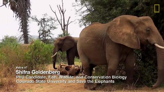 300 mourning elephants come to say final goodbyes after their leader passes away 2