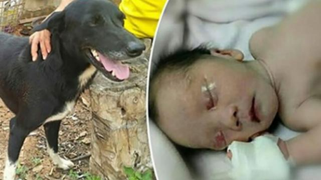 Newborn baby is buried alive by her 15-year-old mother: Rescued by unexpected friend