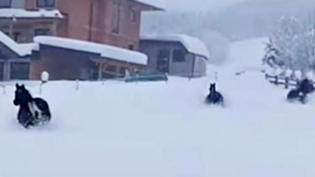 Three horses are released in deep snow and their absolute joy playing is so wonderful to see