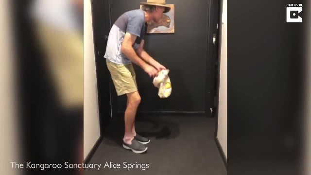 Baby kangaroo practices his 1st hops ever and you've never seen anything cuter