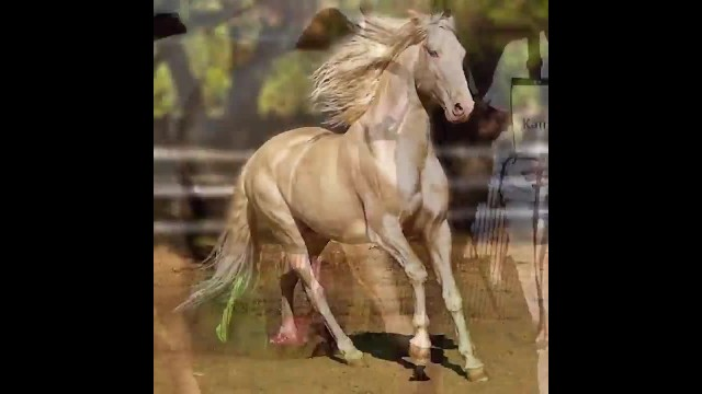 Mother Nature Surprises Us With A Rare Breed Of Horse Believed To Be The Most Beautiful In The World