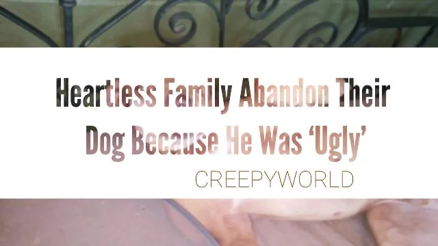 """"""" Heartless Family Abandoned Their Dog Because He Was 'Ugly'"""""""