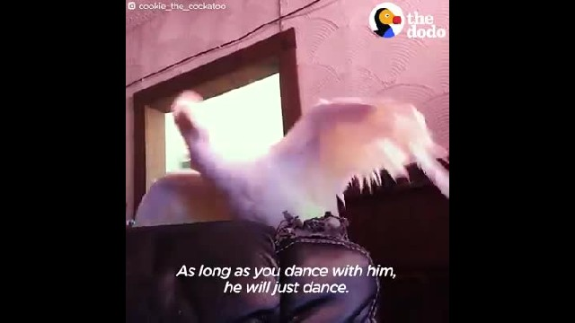 Cockatoo Left In Windowless Basement Until Sweet Woman Comes To The Rescue