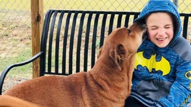 7-year-old honored for finding new homes for nearly 1,400 dogs