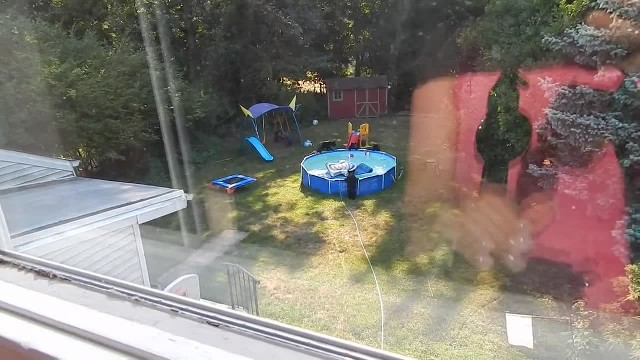 A bear family takes a dip in our pool - Part I