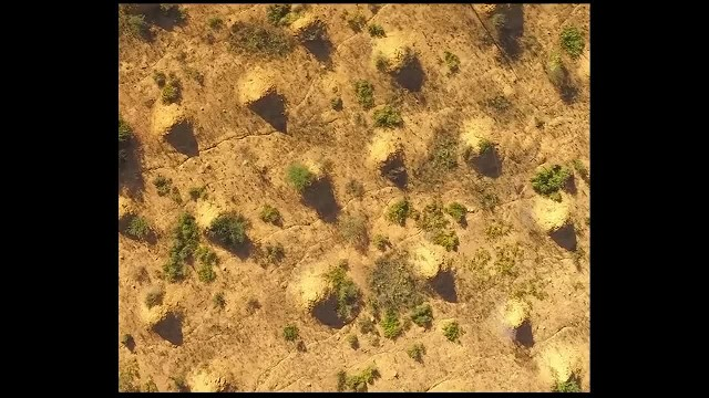 When I saw what crawled out of these eight-foot tall mounds, my heart skipped a beat