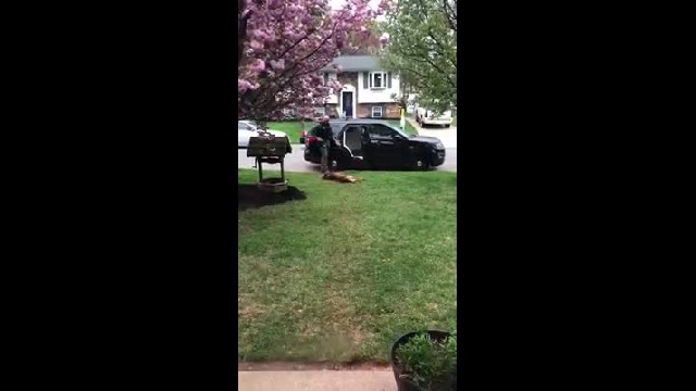 Stubborn K-9 Officer Refuses To Clock In Until He Gets A Belly Rub.