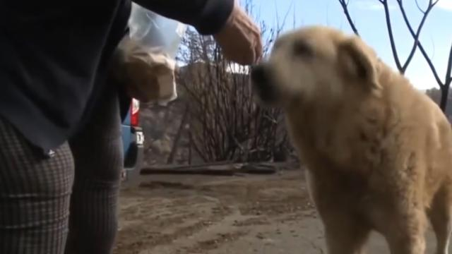 Camp Fire evacuees return home to find lost dog patiently waiting for them
