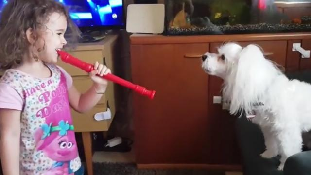 A little girl joins forces with a howling dog to perform an unexpected but stunning duet!
