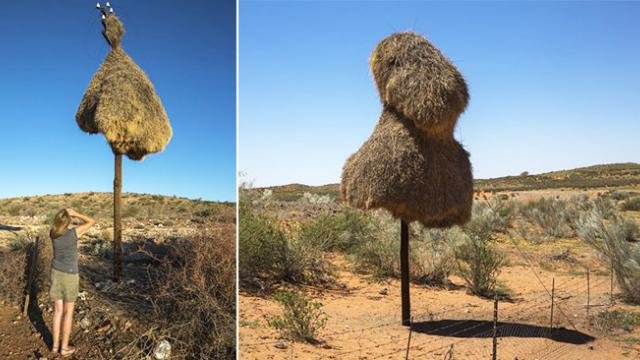 When we found these giant nests, I couldn't resist the urge to see what lives inside