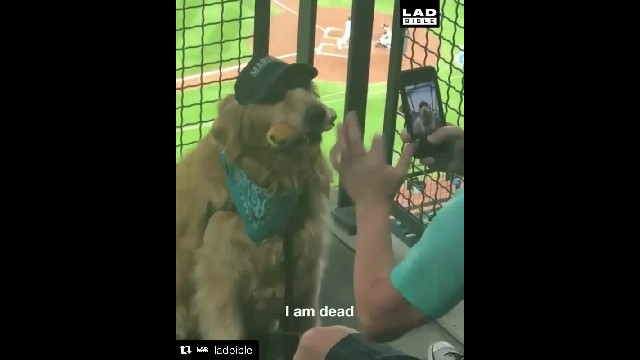 Watch Very Good Dog Patiently Wait to Eat So His Owner Can Take a Picture