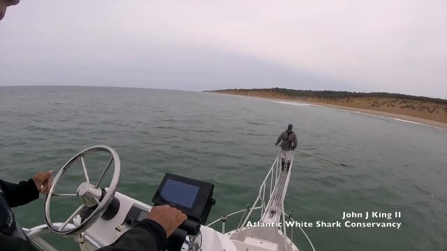 Great white shark leaps out of water, missing scientist by just a few inches