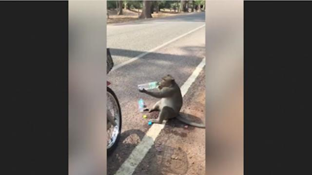 Monkey stops driver on side of road, asks for food and