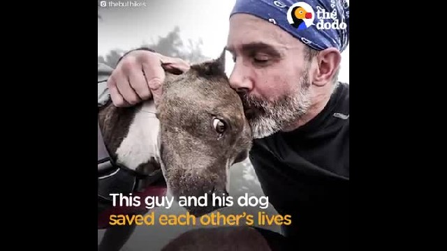 Recovering addict rescues dog from euthanasia, but she refused to look at him