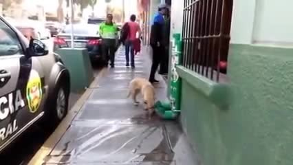 Police Install Special 'Stations' Around Town For Stray Dogs And They Deserve Our Applause
