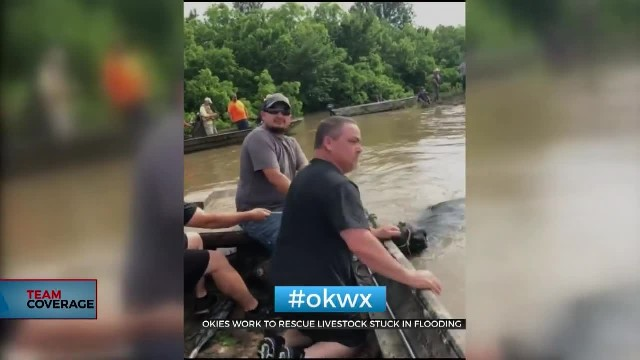 Oklahoma Cowboys Come Together To Rescue Livestock From Floods