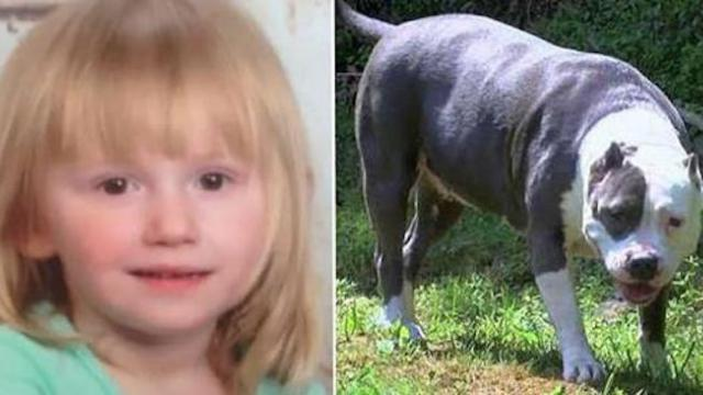 Neighbor opens his door, sees toddler who's been missing for 2 days has been protected by a pit bull