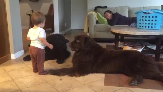 Adorable toddler leans in to kiss dog - everyone's laughing when he gets more than he asked for