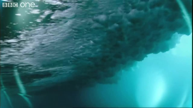 This two-minute video is the most incredible thing I've ever seen about nature
