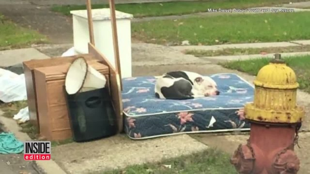 After Family Abandons Pet Pit Bull A Very Thoughful Hero Comes To The Rescue