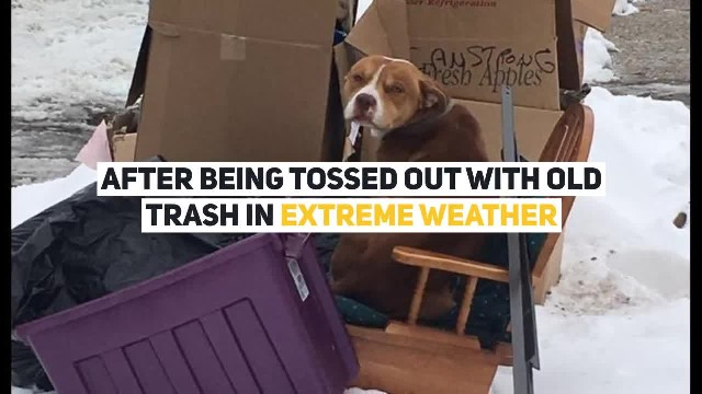 Dog Tossed Out Together With Old Trash Found Trying To Keep Warm On An Old Chair