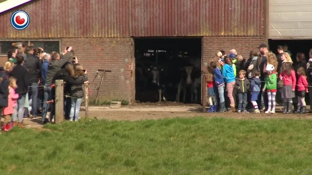 Cows kept inside barn for 6 months are finally released, now watch their reaction to freedom