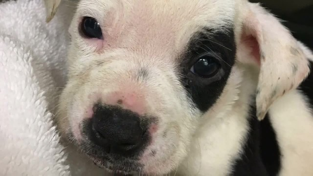 Pup thrown on street because he's 'different' - but now he's found someone who loves him as he is
