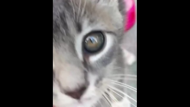 Stray Kitten Climbs onto Cyclist's Shoulder and Insists on Being Adopted