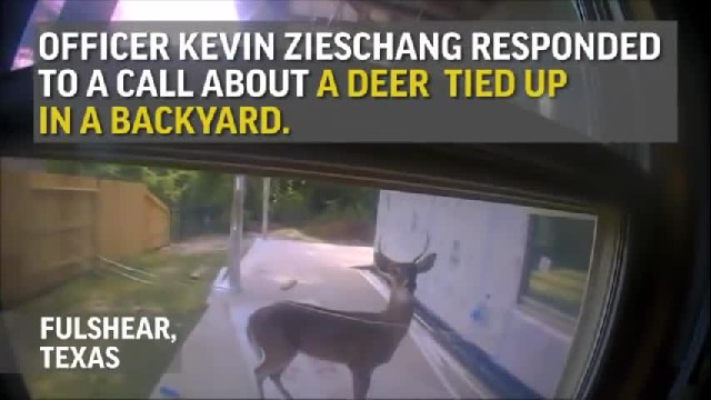 Deer shows up at back door frantically begging for help - They notice its antlers and call 911
