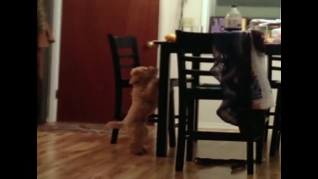 He can't reach his bone, but when owners see the other pups reaction they burst out laughing