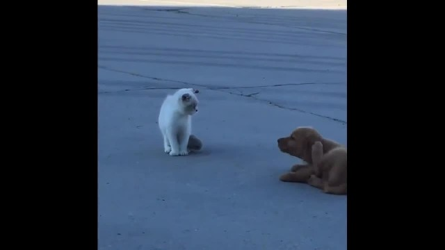Adorable moment when puppy stalks a kitten and pretends to avoid getting caught—I'm not following yo