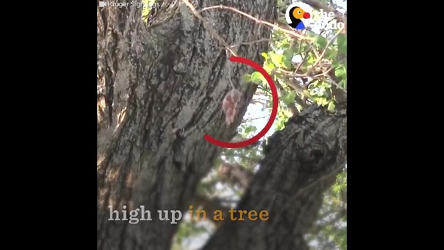 Rescuers Come Across Baby Squirrel Stuck On Thorn & Know They Need To Act Fast