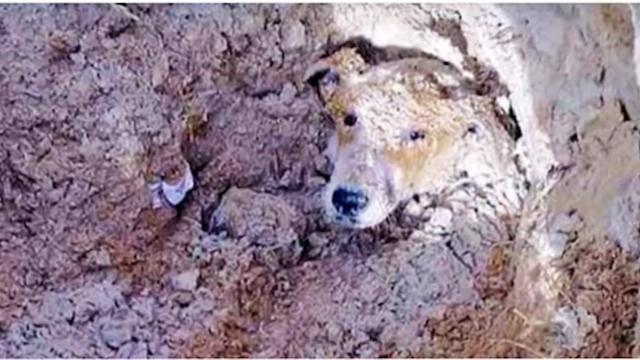 School principal orders janitors to 'get rid' of barking dog so they buried her alive