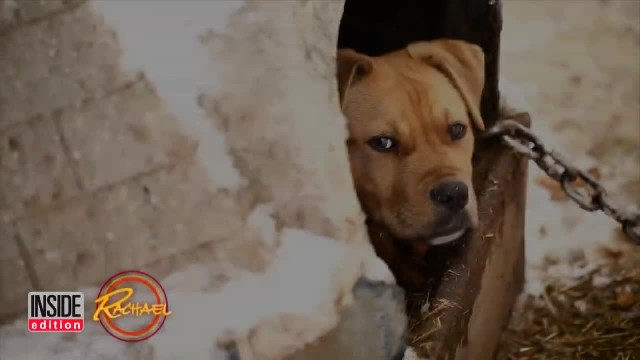 New York State's First Pit Bull K9 Officer is Trying to Change Her Breed's Image