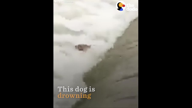 Dog swept away in flood was near giving up, til these brave heroes stepped in
