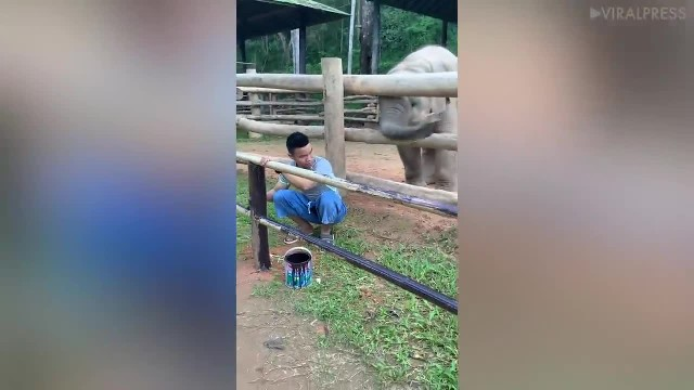 Baby elephant wants worker to play, and it is the cutest thing we've ever seen