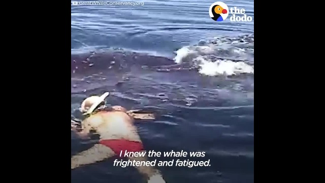 Family saves whale from nearly drowning, only to have animal come back and say thank you