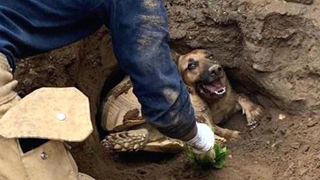 Firefighters arrive to free dog from dirt tunnel, find 80-pound tortoise wedged in beside her