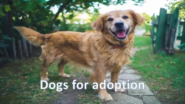 Watch the heartwarming moment this dog realizes he's  being adopted