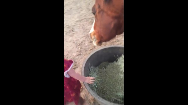 Baby girl invades horses personal space for kiss at feeding time prompting reaction mom can't ignore