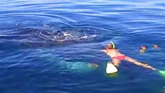 After saving a humpback whale from nearly drowning a family is blown away by her 'Thank You'