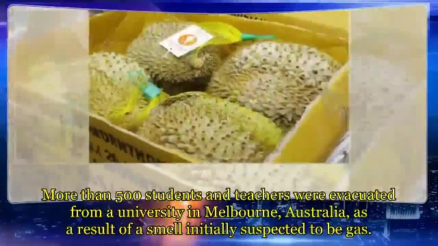 Gas leak at University of Canberra library in Australia revealed to be durian fruit