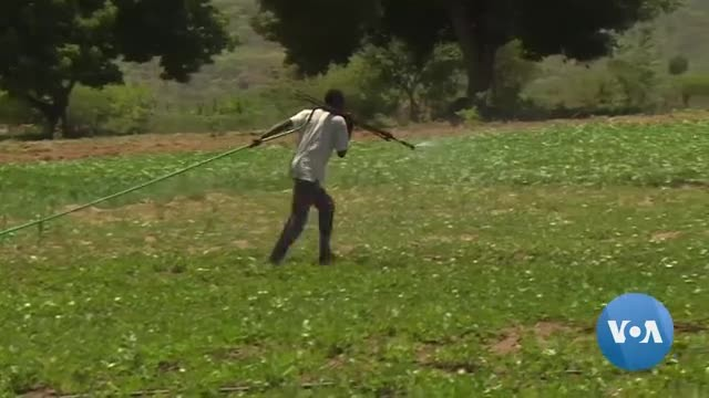 UN Agency Hopes to Revive Zimbabwe's Agriculture Sector